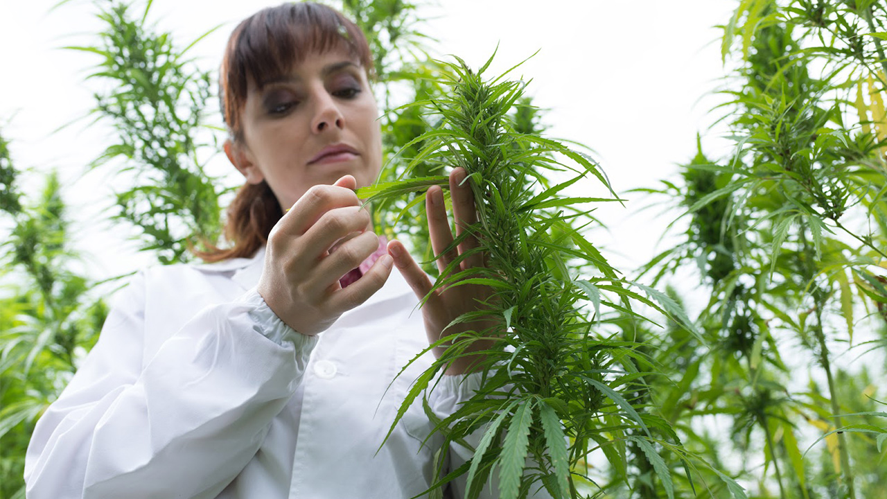Industrial Hemp Farms: The Rising Agriculture Business